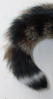 rt-tail.jpg