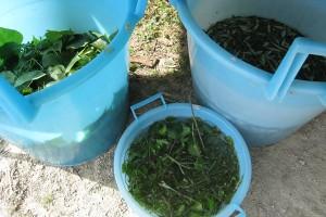 Soaking Plant Materials
